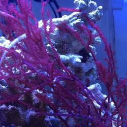 Oranda Aquarium 25 Photos Aquarium Services Hancock