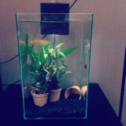 Got some new plants today for Mr Fish. :)