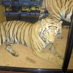 The Walter Rothschild Zoological Museum, Tring, Hertfordshire