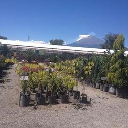 Los viveros de atlixco viveros y jardiner a atlixco for Viveros de plantas en atlixco