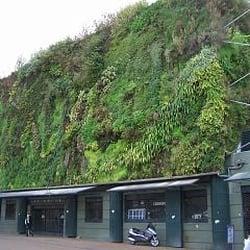 Le mur végétal (photo prise en novembre,…