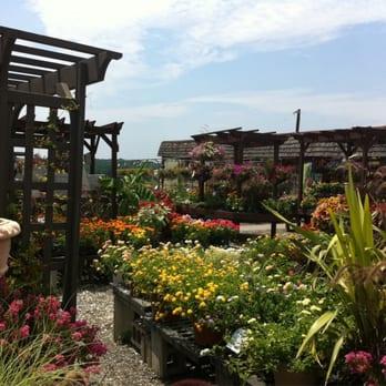 Mostardi nursery nurseries gardening 4033 w chester - Mostardi s newtown square garden ...