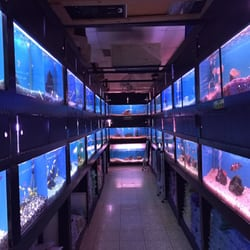405 tropical fish 33 photos local fish stores 15222 for 405 tropical fish