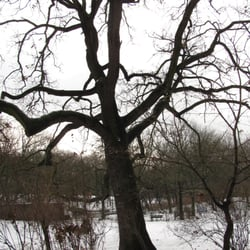 Der erste Baum des Parkes, die…