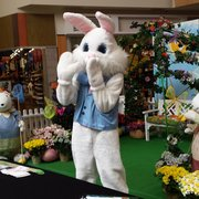 N Cat Windward Mall Windward Mall