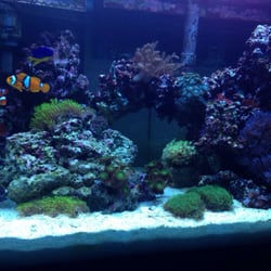 discount aquarium fish and reef phoenix az yelp