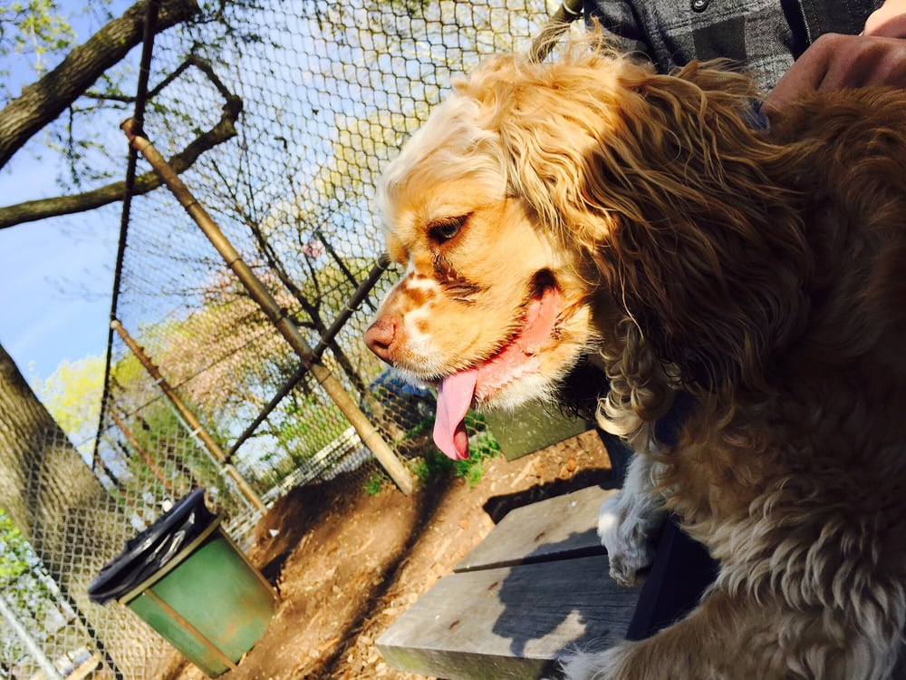 Underbridge Dog Run - Dog Parks - Forest Hills - New York, NY ...