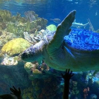 New England Aquarium Boston Ma United States This