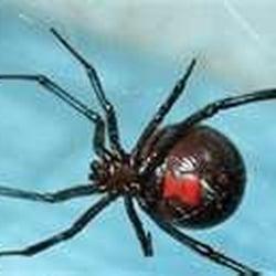 Encino Pest Control logo