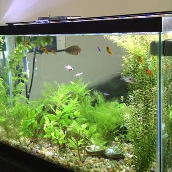 Sunset pet supplies 13 photos 43 reviews pet shops for Fish tank deals