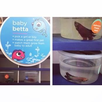 Petco 16 photos 37 reviews pet stores 2475 for Petco betta fish price