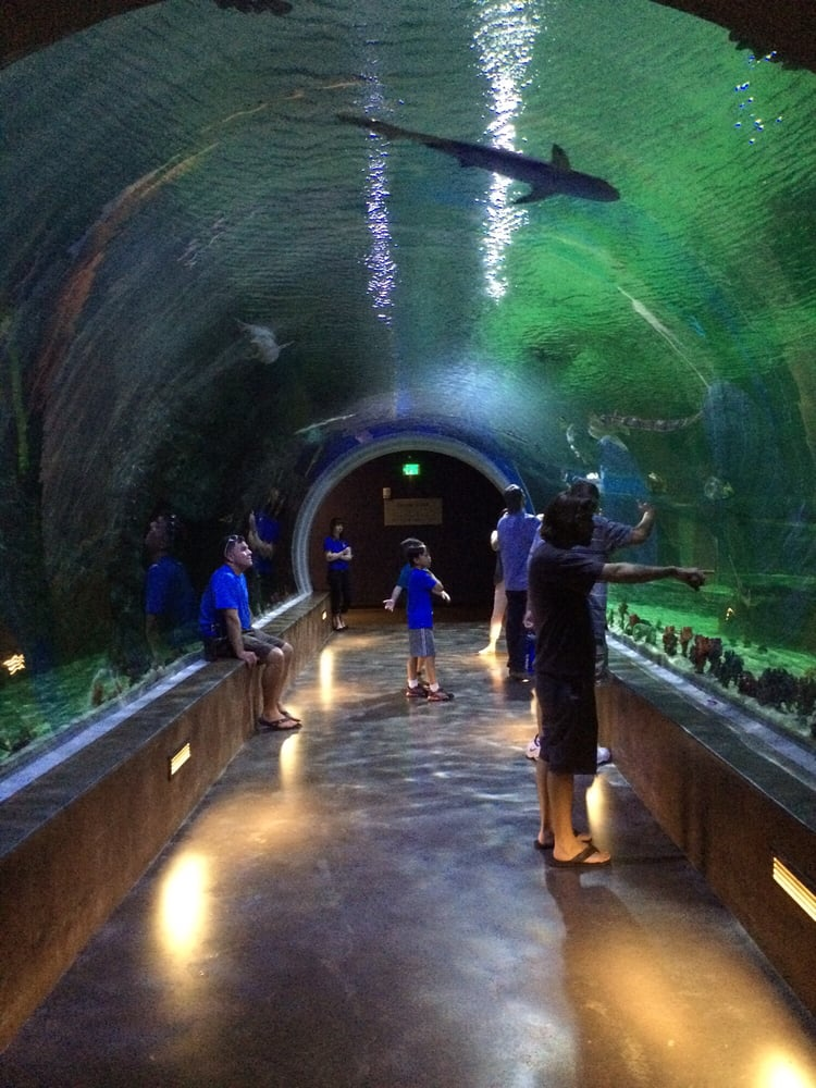 The shark exhibit | Yelp