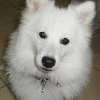 nose 2 tail pet care   pet groomers   westlake   westlake