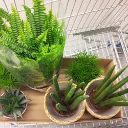 Preiswerte, schöne Zimmerpflanzen von…
