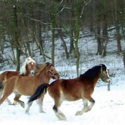Ponyhof Weißenstein, Hagen, Nordrhein-Westfalen