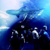 Camden Adventure Aquarium