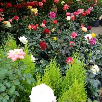 Mercado de flores madreselva de xochimilco 15 fotos - Madreselva en maceta ...