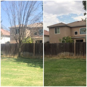 Photo Of Clovis Tree Service Ca United States Before And After