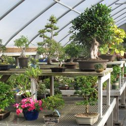 New England Bonsai Gardens Nurseries Gardening 914 S Main St