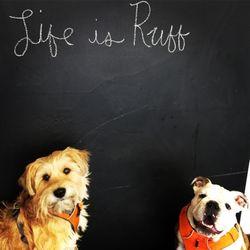 sit social a dog lounge 47 photos 39 reviews pet boarding rh yelp com