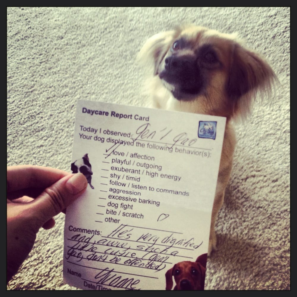Report cards for when your dog comes home- we have plenty of daycare ...