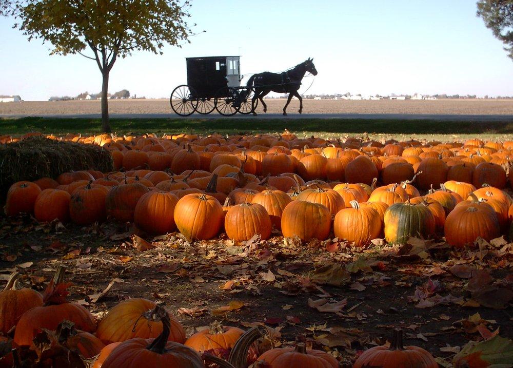 The Great Pumpkin Patch: 1749A Cr 1900 N, Arthur, IL