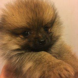 Allevamenti Di Animali Domestici Pet Breeders Via Rossini 45