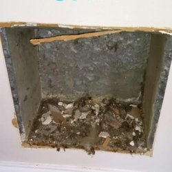 Photo of Green Clean Carpet & Air Duct Cleaning - Schaumburg, IL, United States