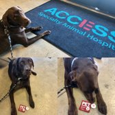 Access Woodland Hills >> Access Specialty Animal Hospital 105 Photos 477 Reviews