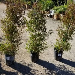 Photo Of Cherry Valley Nursery Landscape Supply Ca United States