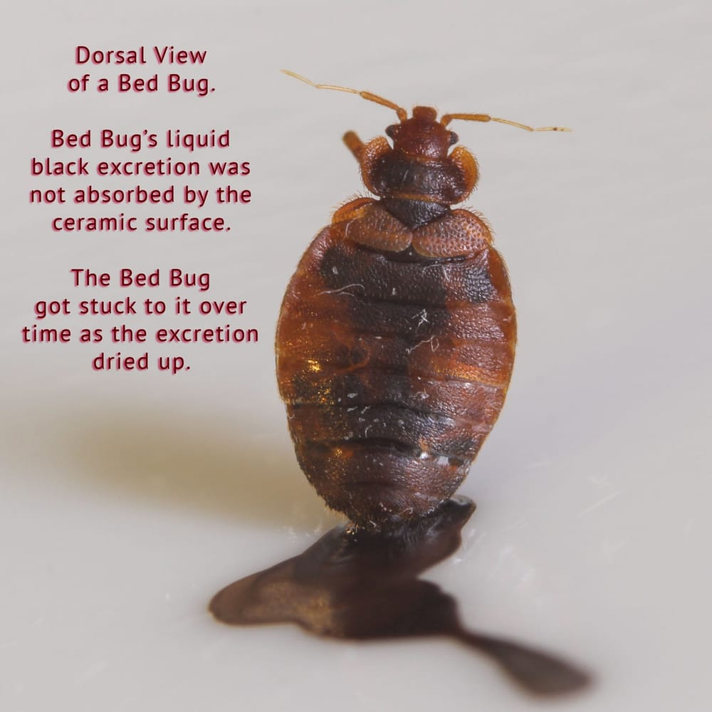 Are Bed Bugs The Landlord