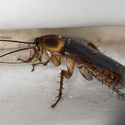 Photo Of Arrow Pest Control Morganville Nj United States Roaches