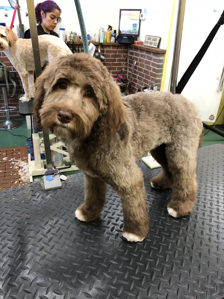 Happy Tails Grooming: 7 Lupine Rd, Andover, MA