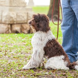 Inghram's Sit N Stay Dog Academy - 34 Photos & 24 Reviews