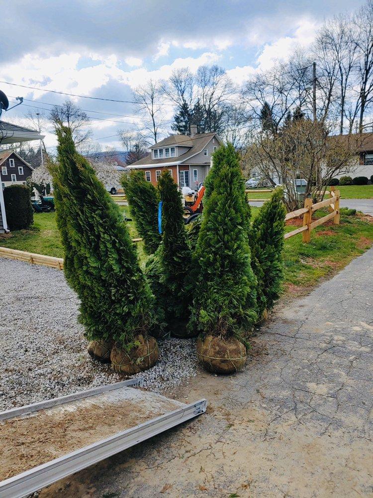 Ellenburg Tree Farm: Churubusco, NY
