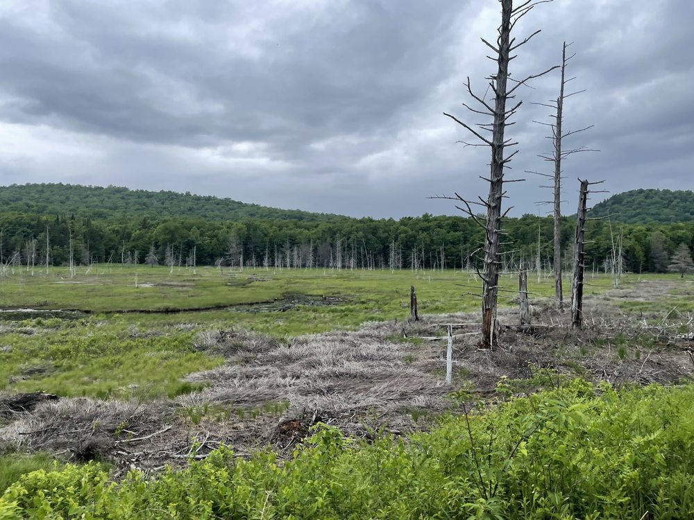 Social Spots from Adirondack Scenic Railroad
