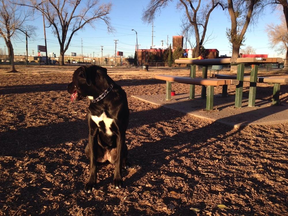 Dog Park Shade Albuquerque
