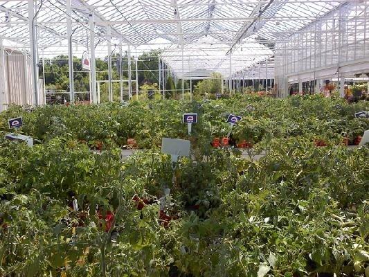 Superior Petitti Garden Centers   Nurseries U0026 Gardening   18941 Pearl Rd,  Strongsville, OH   Phone Number   Yelp