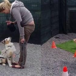 École du Chien - Dressage de chien & autres animaux