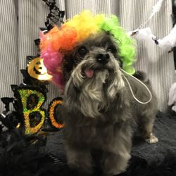 A different breed dog grooming 18 photos pet groomers 2850 s photo of a different breed dog grooming indianapolis in united states we solutioingenieria Image collections