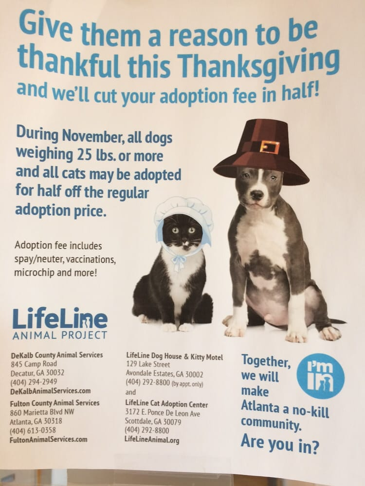 LifeLine Animal Project Reviews Animal Shelters Lake - 20 reasons why you should be thankful to have a dog