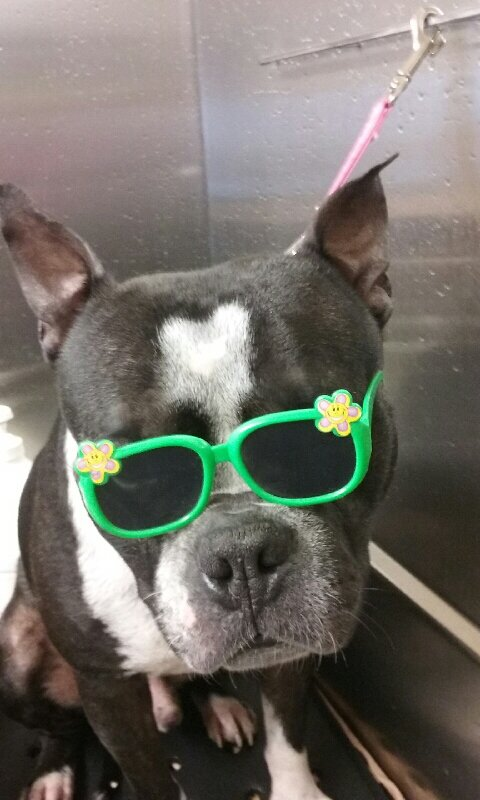 Sherry's Pampered Pet Parlor & Lodge: 508 Lancaster Hwy, Chester, SC