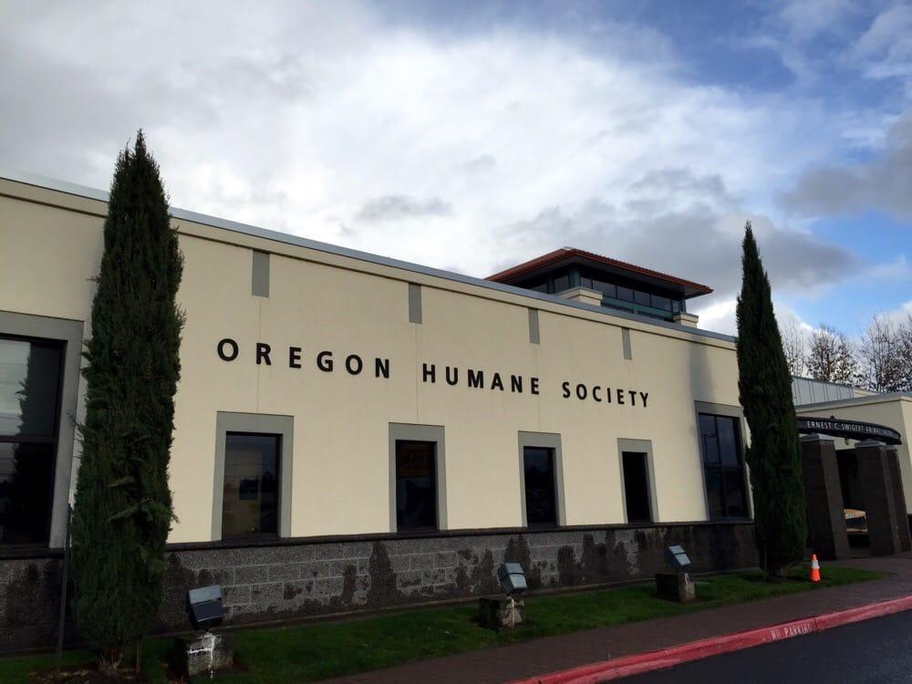 Oregon Humane Society Dogs