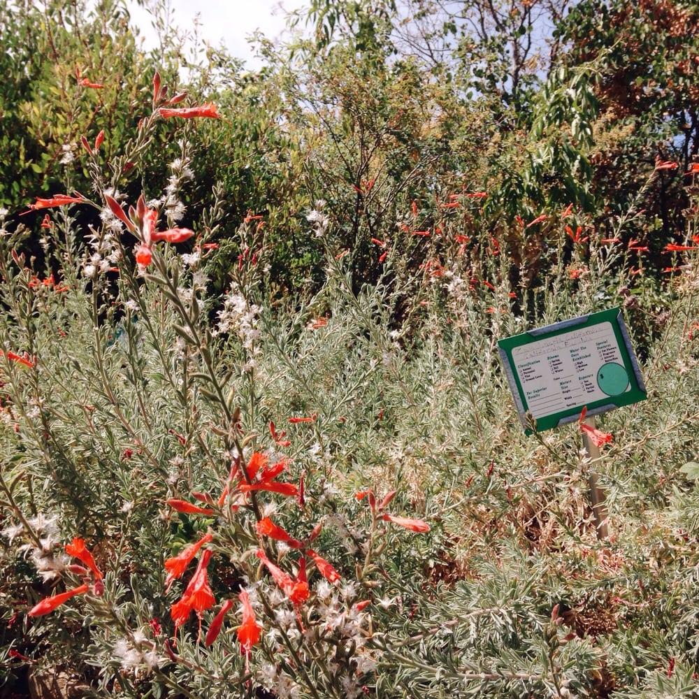 Floral Native Nursery - Nurseries & Gardening - 2511 Floral Ave ...