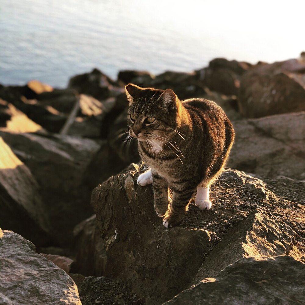 Cat Jetty