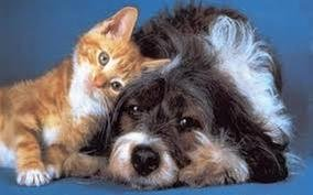 Fremont Veterinary Hospital: 2418 Florence St, Canon City, CO