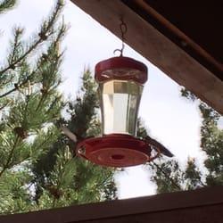 Photo Of Cliffrose Lodge U0026 Gardens   Springdale, UT, United States. Two  Hummingbirds