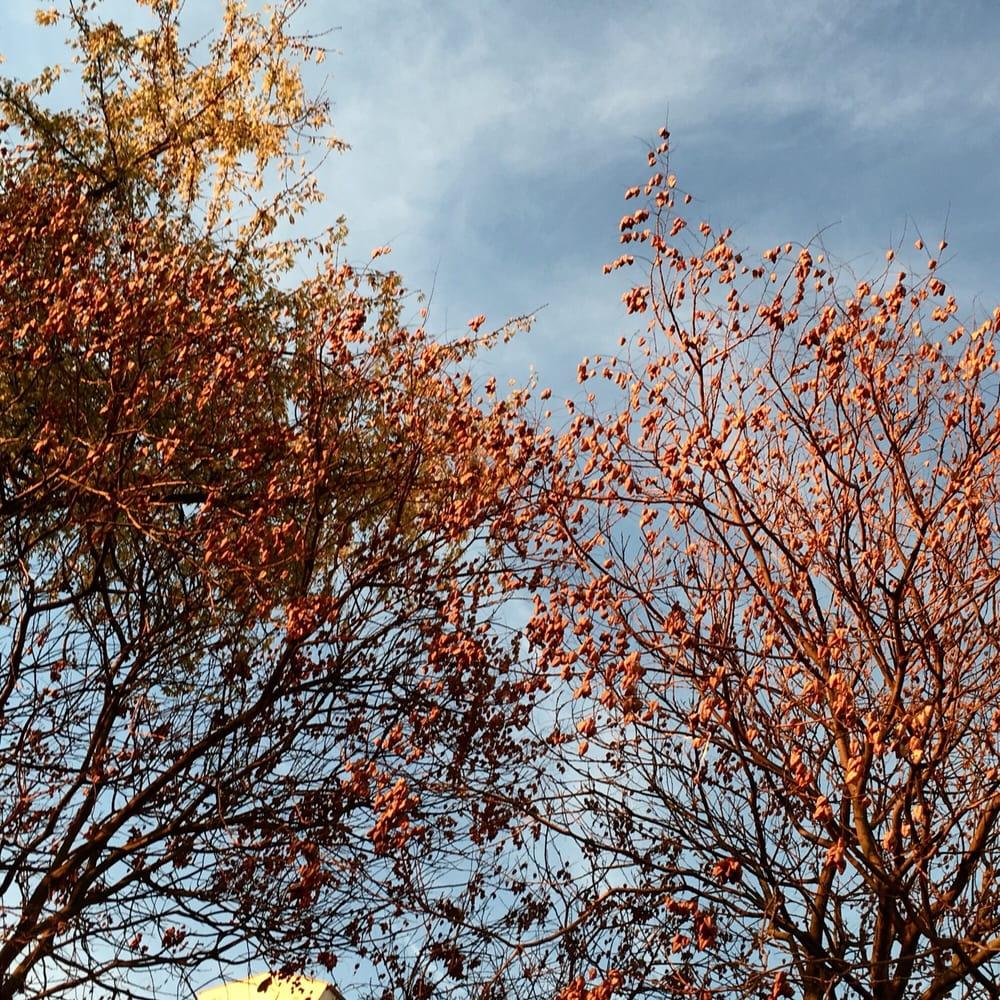 L automne et ses couleurs yelp - L automne et ses couleurs ...