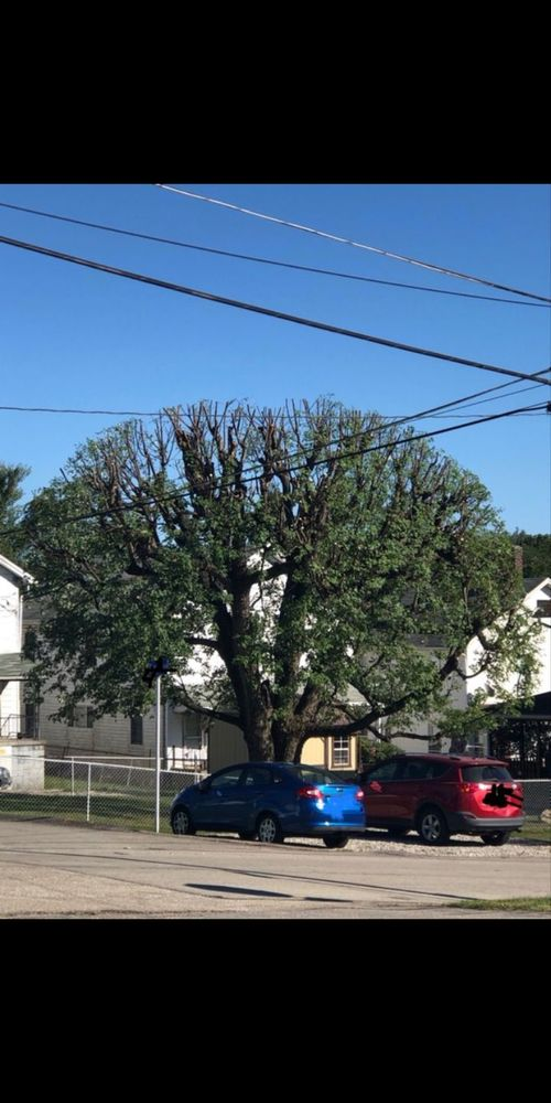 Fields Tree Service: Uniontown, PA