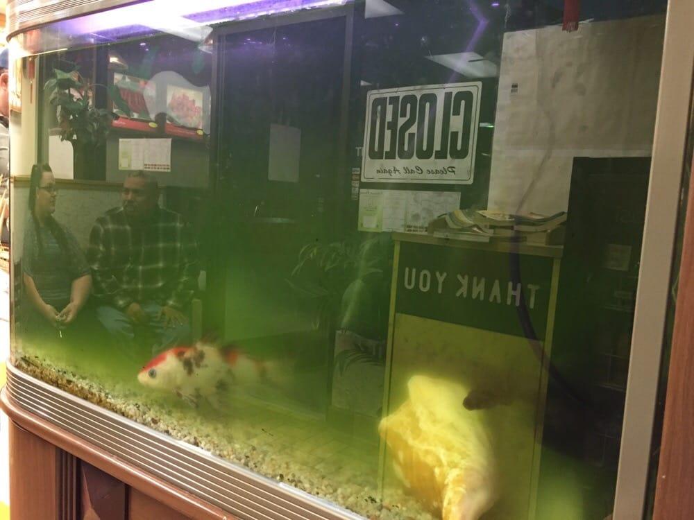 Dirty fish tank yelp for Dirty fish tank